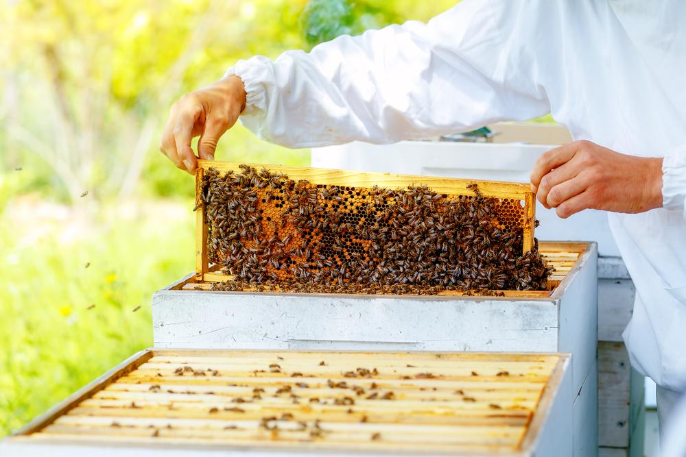 Zdroj foto: Jozef Klopacka / Shutterstock.com